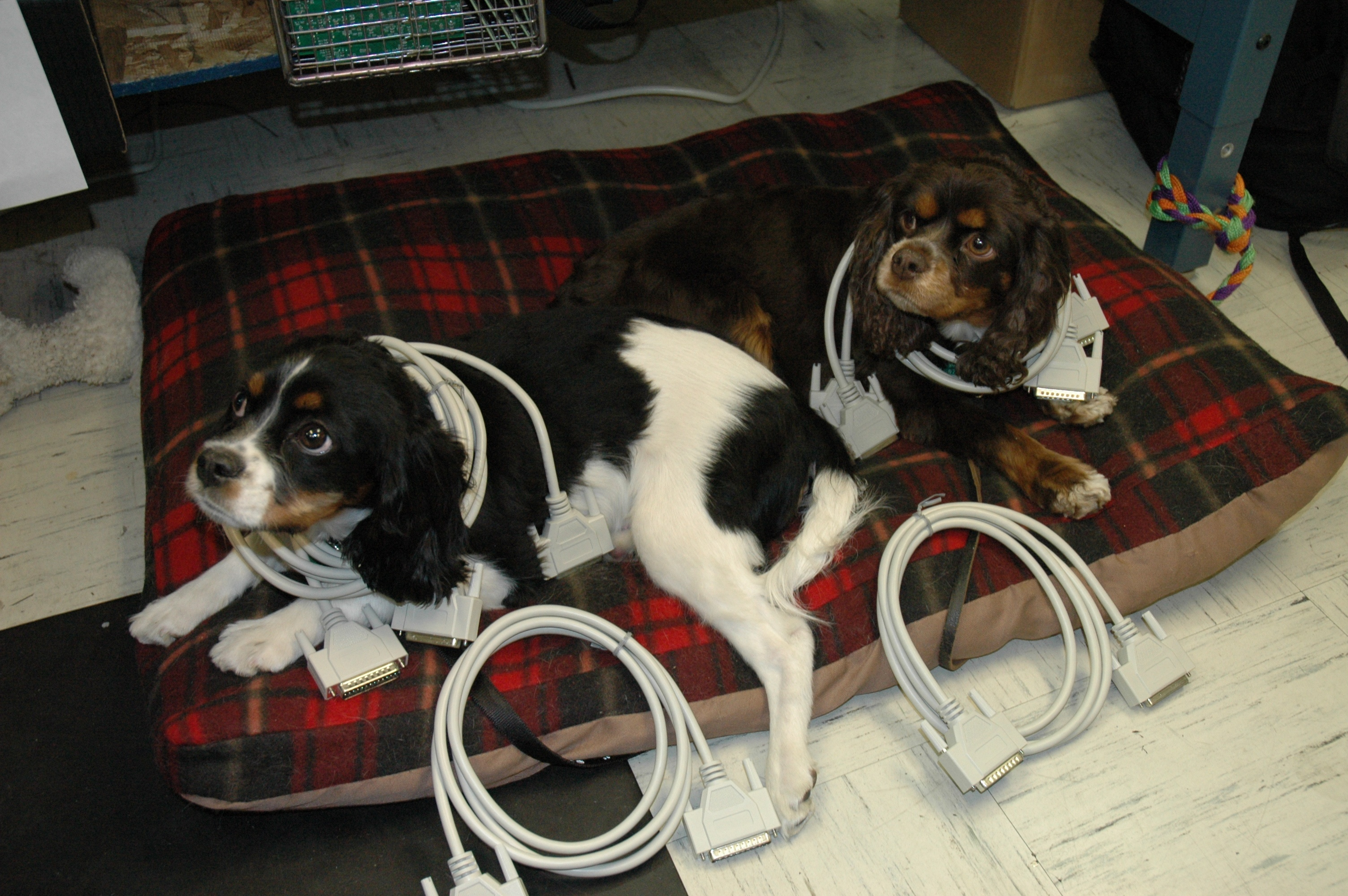 Dogs guarding cables